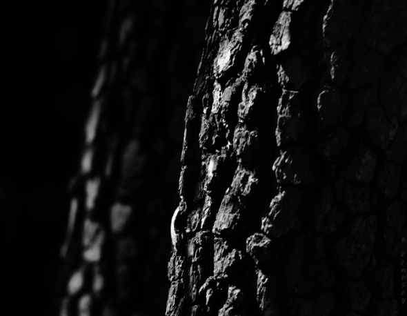TreesMJ