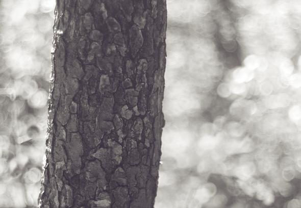 TreeMJ