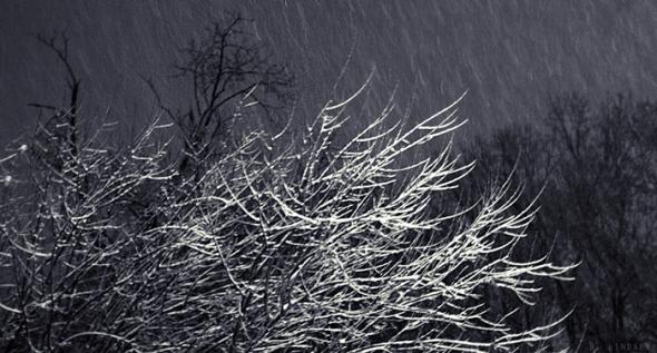 Snow1MJ