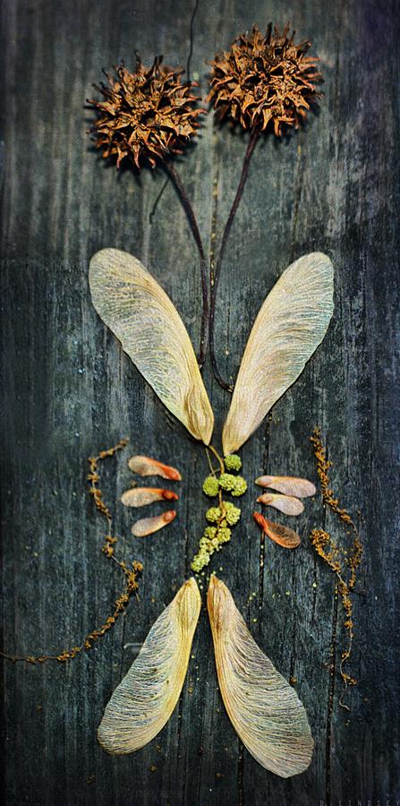 butterflyforHsoj
