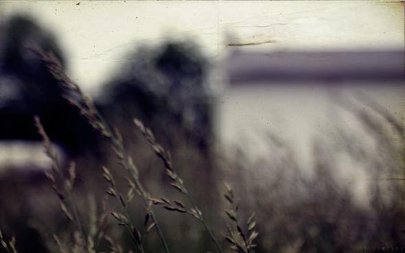 wheatmj