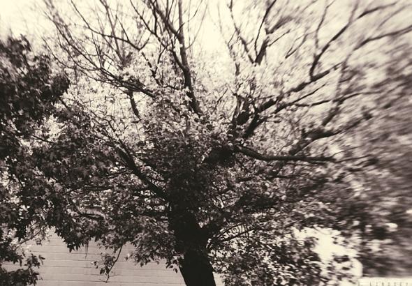 treeoutside