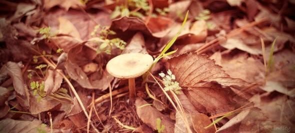 mushroom-in-back-of-aunt-marthass-yard