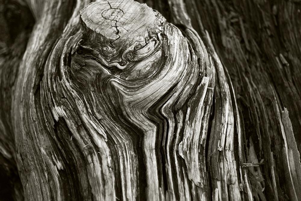 treepicClingmansDome